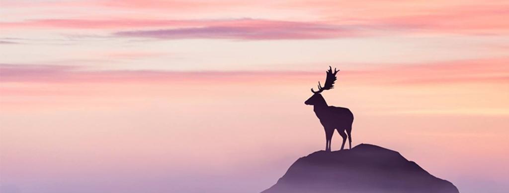 Deer Chinese