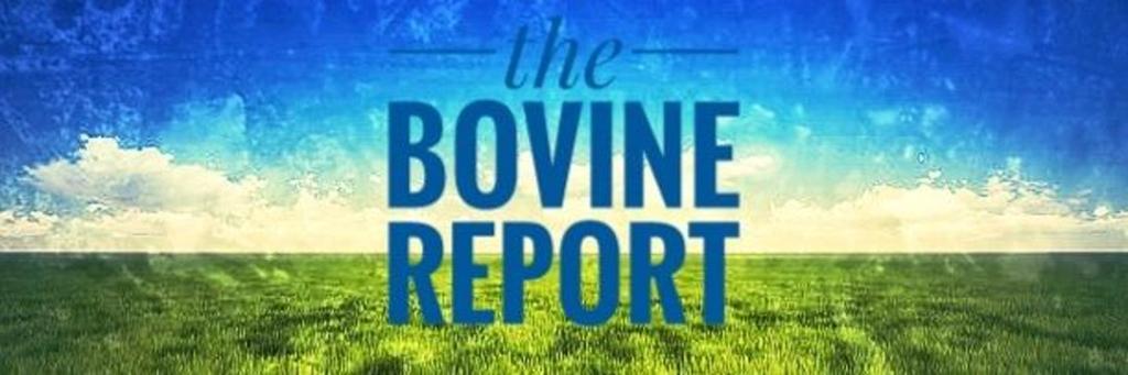 The Bovine Report