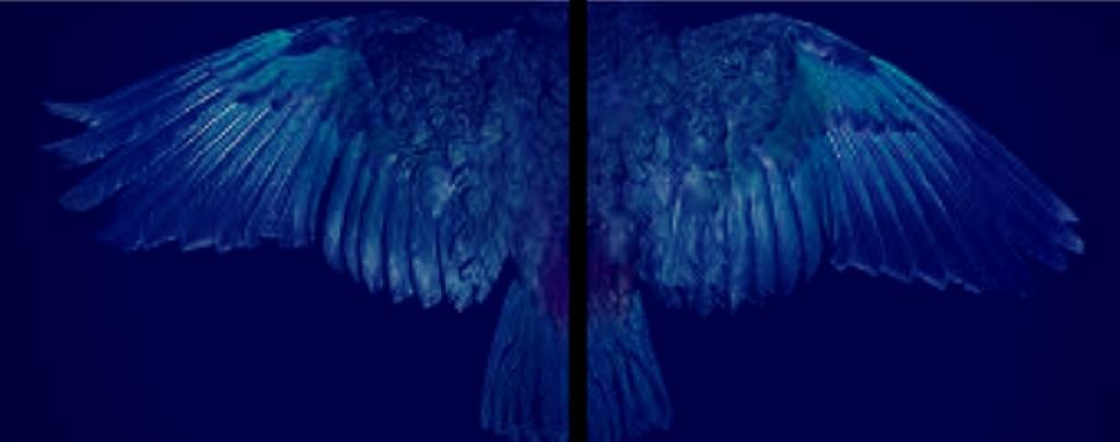 Dark Dunedin: Heaven Looks On