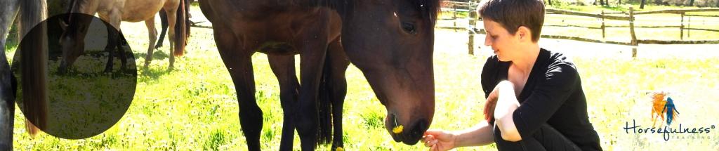 The Horsefulness Training Podcast