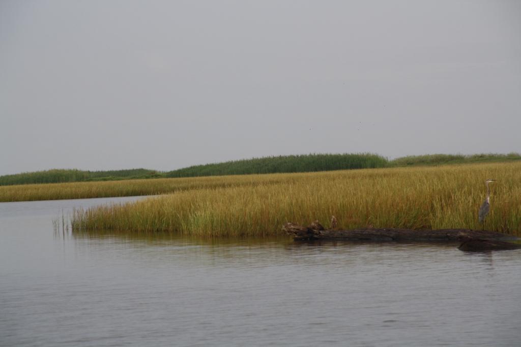 Coastal Advocacy Adventures