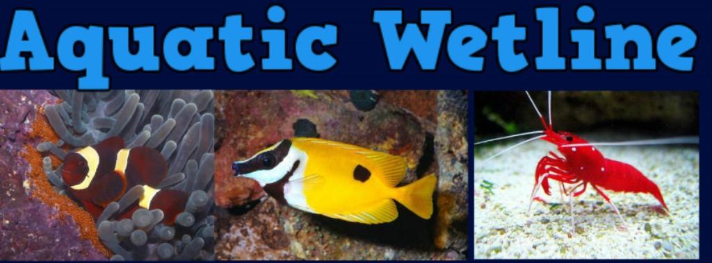 Aquatic Wetline with Aqua Alex