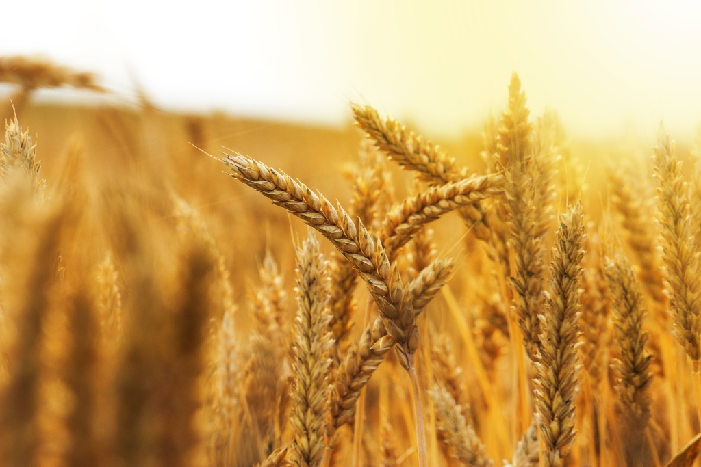 RaboResearch Food & Agribusiness