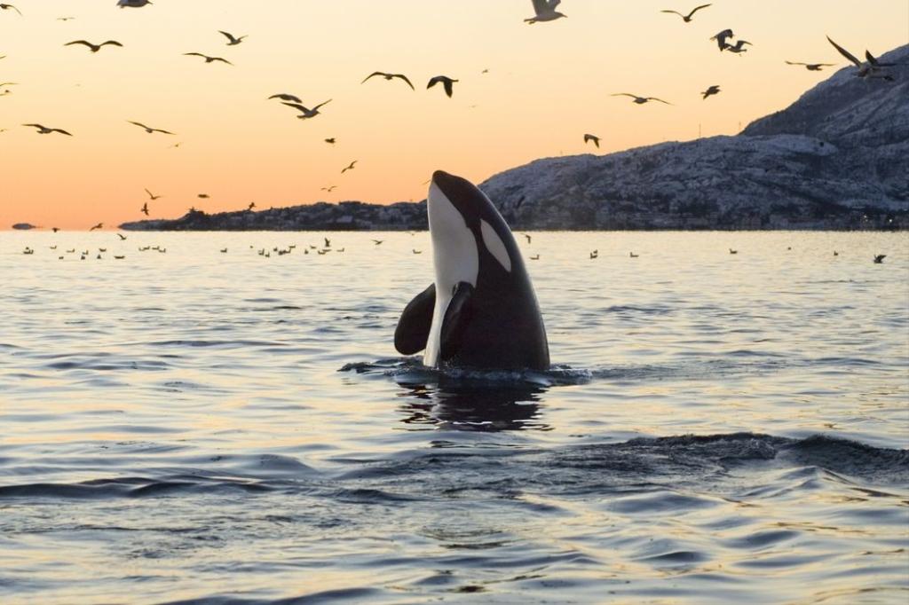 Skaana | Orcas and Oceans Podcast