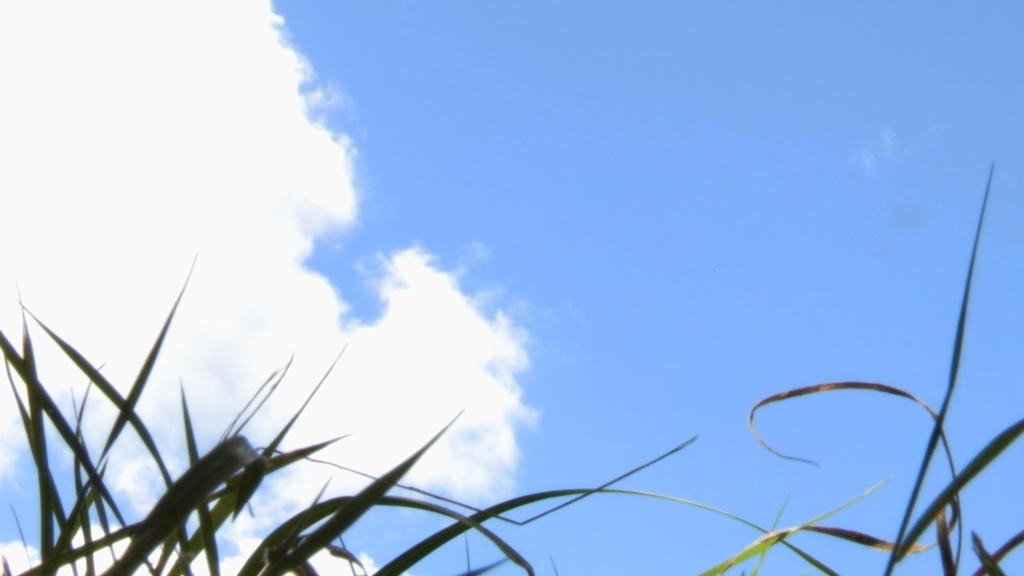 Grass Cloud